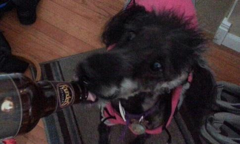 Maggie drinking founders